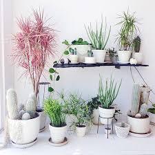 Las mejores plantas para decorar (y purificar) la casa3