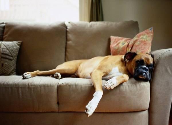 Trucos de limpieza para casas con mascotas